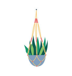 Macrame plant hangers with succulent hobconcept vector