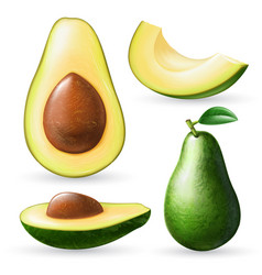 realistic avocado set vector image