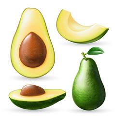 realistic avocado set vector image