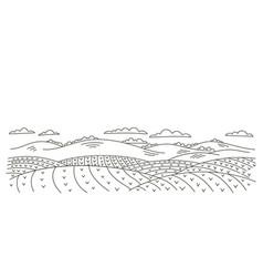 seedlings fields landscape countryside rural vector image