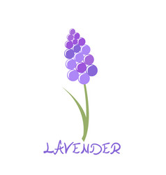 Stylized lavender icon vector