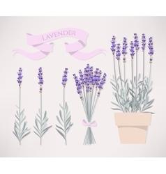 Bouquet of lavender vector