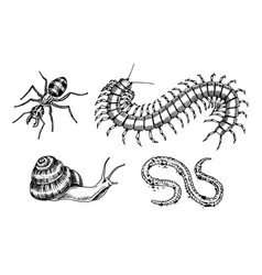 big set insects bugs beetles snail worm vector image