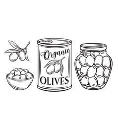 canned olives vector image