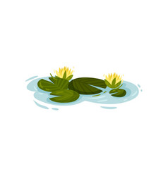 Four water lily leaves with yellow flowers vector