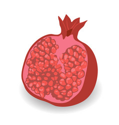 half of pomegranate vector image