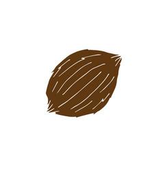 hand drawn doodle sketch brown coconut vector image