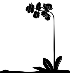 for designers plant - orchid vector image vector image