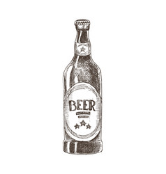 beer bottle with label sketch vector image