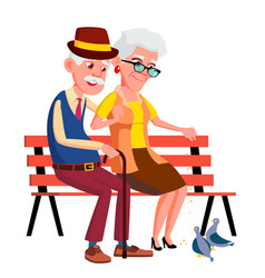 elderly couple sitting on bench in summer autumn vector image