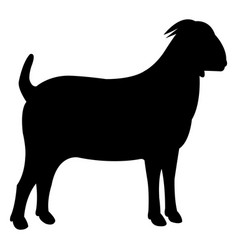 goat black icon vector image