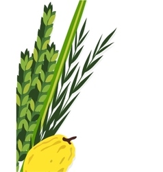 Jewish holiday sukkot lulav etrog arava vector