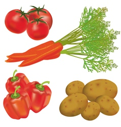Set of realistic vegetables vector