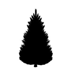 silhouette fir tree coniferous flora vector image