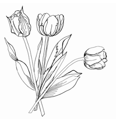 TulipSketch Black and White vector image