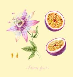 watercolor passion fruit set vector image