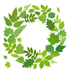 wreath of green leaves vector image