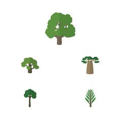 Flat icon bio set of evergreen jungle decoration vector