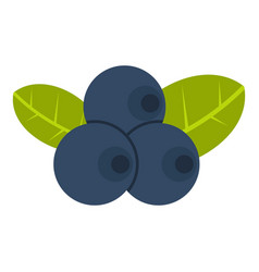 fresh blueberries with leaves icon isolated vector image