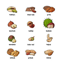 hand drawn nuts and seeds pistachios brasil nuts vector image