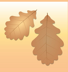 Oak leaves on a warm background vector