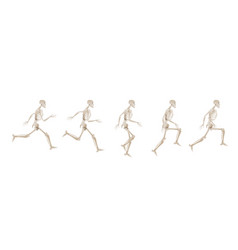 Collection running human skeletons vector