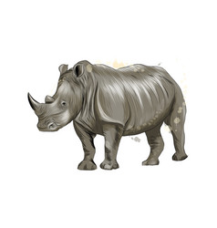 rhinoceros from a splash watercolor colored vector image