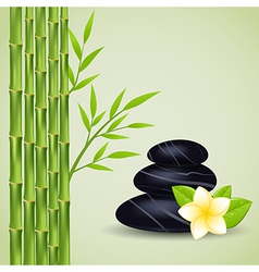 spa stones bamboo vector image