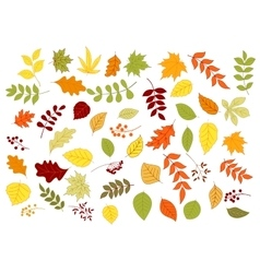 Autumnal leaves herbs seeds and berries vector image