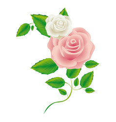 Realistic silhouette with pink rose vector