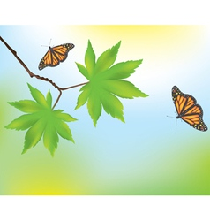 maple leaves and butterflies vector image