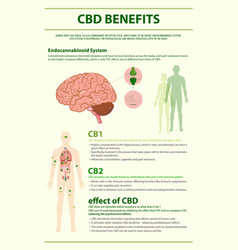 Cbd benefits human vertical infographic vector
