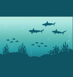 silhouette of shark and fish underwater landscape vector image