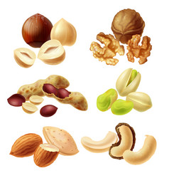 different nuts realistic set vector image vector image