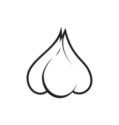 garlic on white background vector image vector image