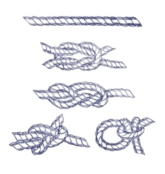 Sea Knot Rope Hand Draw Sketch vector image