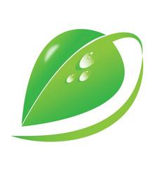 big green leaf dew drops organic natural vector image
