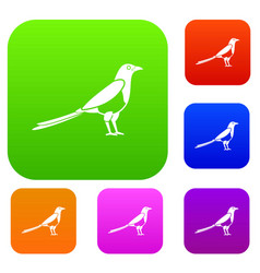 bird magpie set collection vector image