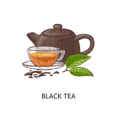 Black tea composition drawing - hot herbal drink vector