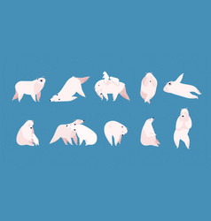 Collection of adorable amusing polar bear in vector