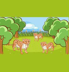 Scene with cheetahs in open zoo vector