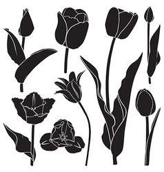 Tulips silhouette set vector