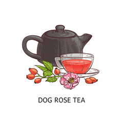 dog rose tea - berry fruit beverage drawing in vector image