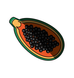 isolated papaya fruit vector image