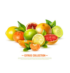 Realistic citrus fruit vector