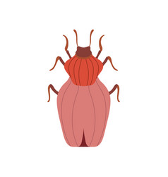 Red beetle insect bug top view vector