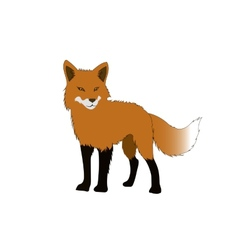 Red fox isolated on white backgrounds Stand alone vector image