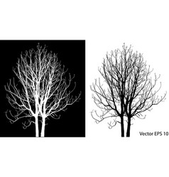 dead tree without leaves vector image vector image