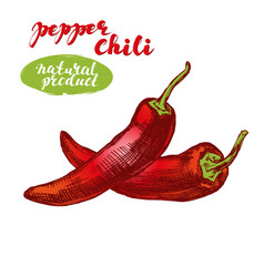 chili peppers vegetable set hand drawn vector image vector image