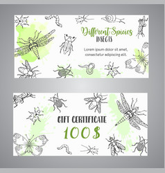 Bugs insects hand drawn gift certificate pest vector